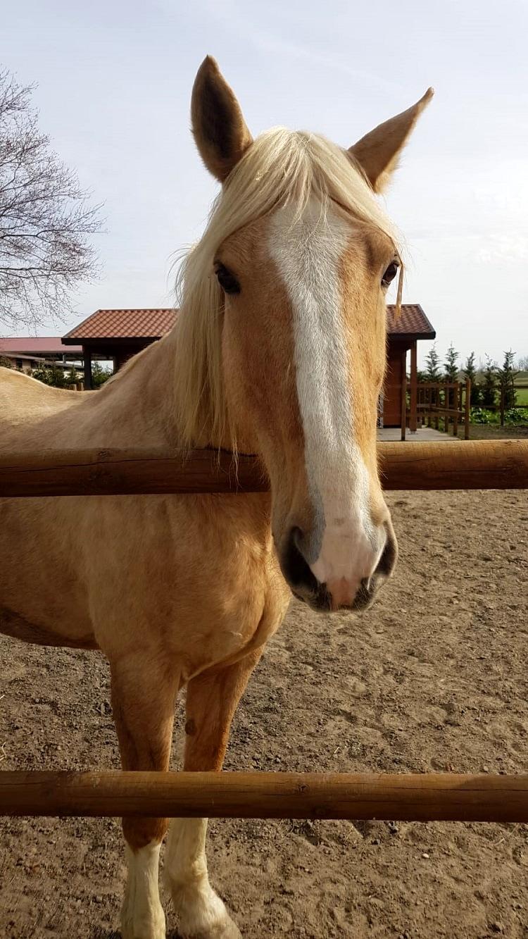 cavallo 2-3