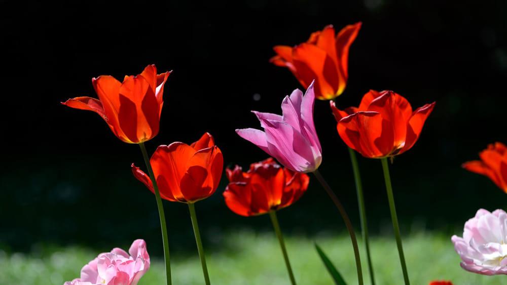 Giardinity Primavera_photo credits Silvano N. Bretini (1)-2