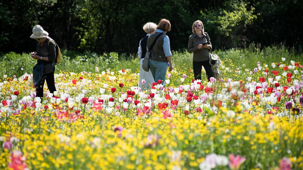 Giardinity Primavera (2)-3
