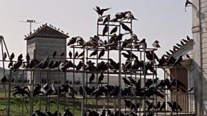 gli-uccelli-2