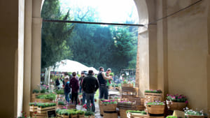 Giardinity_Villa Pisani Bolognesi Scalabrin_28 e 29 ottobre 2017 (4)-2