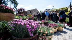 este fiore fiori mercatin piante def-2