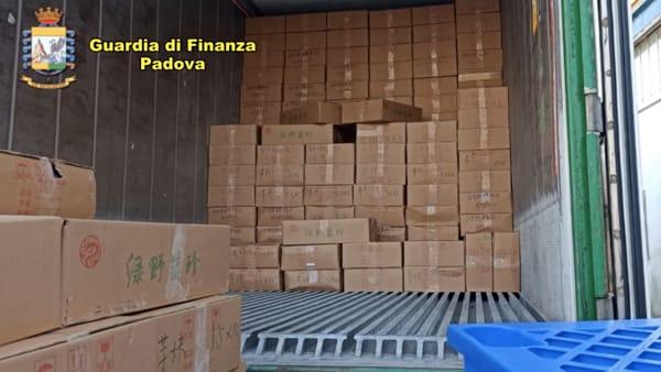 """Pericolo """"peste suina"""": il maxi sequestro della GdF"""