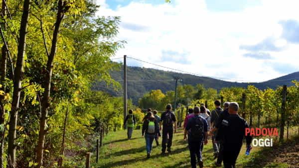"""""""Sentieri e olio di oliva"""", escursione, visita guidata e degustazione sui colli Euganei"""