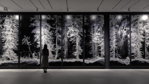 """""""Seconda natura"""", mostra di Quayola all'Orto botanico"""