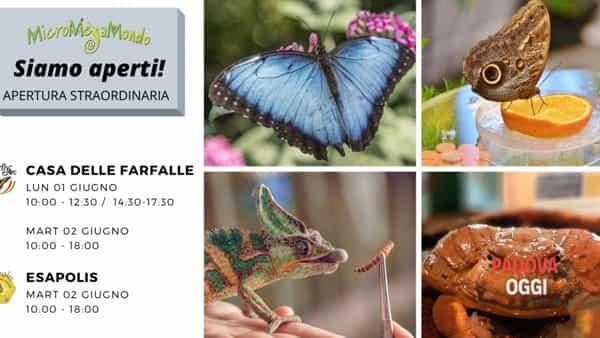 Apertura straordinaria della Casa delle Farfalle e del Museo Esapolis di Padova