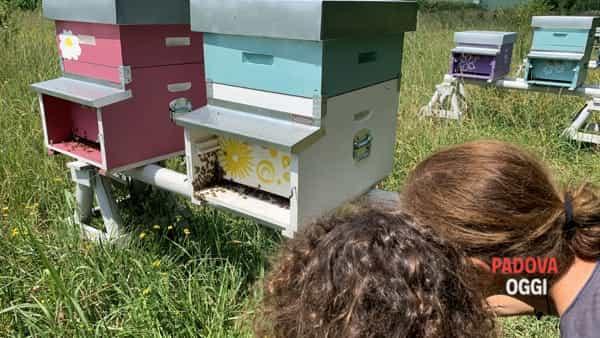 Michela e l'importanza delle api per il nostro ecosistema