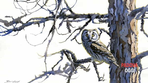 Al Museo Esapolis un corso di pittura naturalistica ad acquerello
