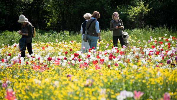 Giardinity Primavera (2)-2