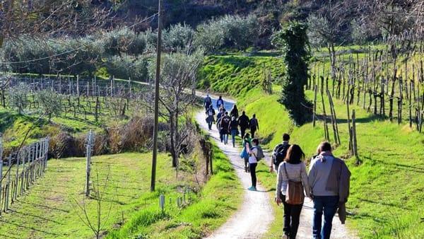 Escursione a piedi sui colli con degustazione finale, iniziativa di Viaggiare curiosi