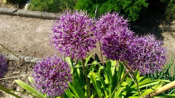 Visita all'Orto Botanico con guida naturalistico-ambientale