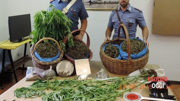 Due chili di marijuana in casa e 68 piante: arrestato un restauratore
