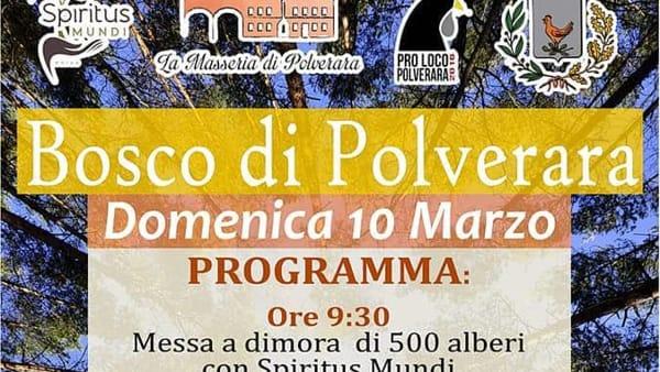 """""""Bosco di Polverara"""": 500 alberi da piantare, rinfresco e visita alla Masseria"""