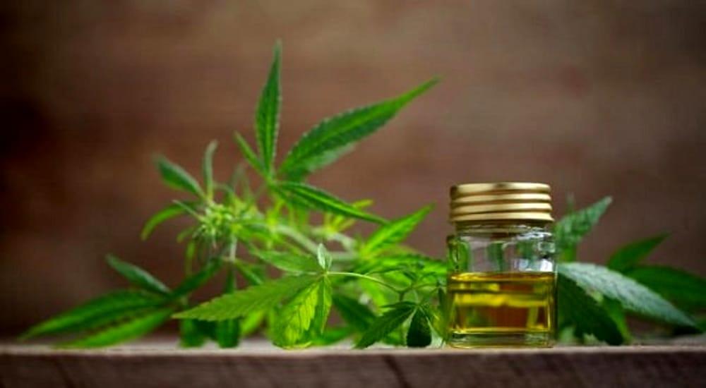 Al Bo si studierà la cannabis: parte a ottobre il nuovo corso