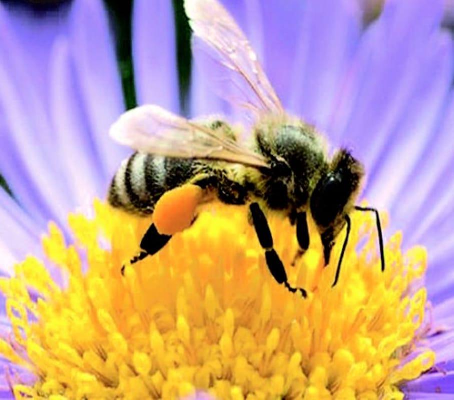 """Api in città. Nettari, api e miele"""", mercatino del miele e  dell'erboristeria in piazza della Frutta il 12 novembre 2017 Eventi a Padova"""