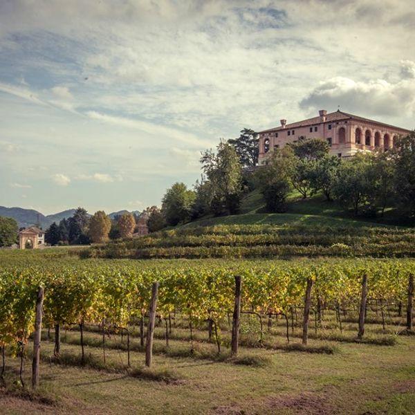 Villa dei Vescovi1, FAI - Fondo Ambiente Italiano-3