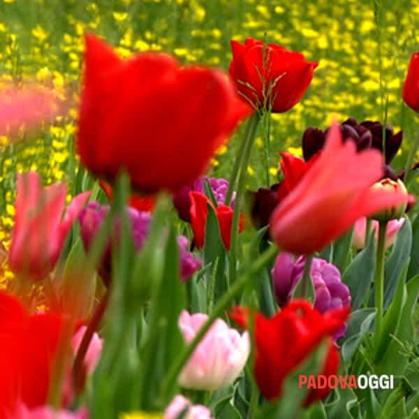inaugura giardinity primavera edizione 2017